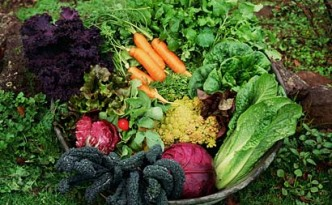 Fall-vegetable-garden